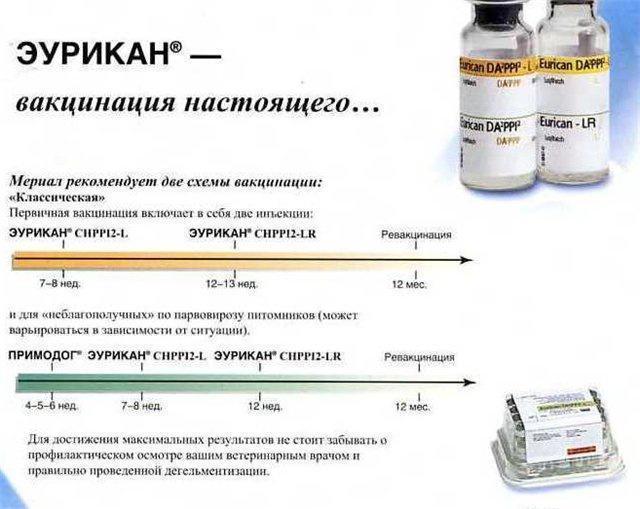 Схема вакцинации вакциной